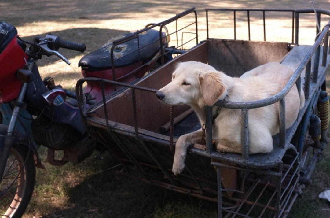 perros-moto1-min